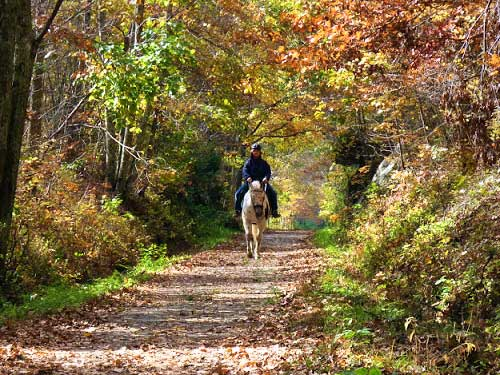 alspt-horseback