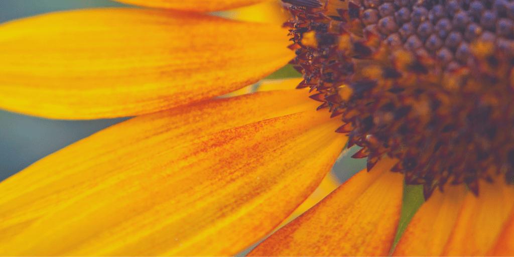 floral_bckgrd