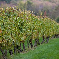 Vineyard_Growth_Bubble